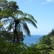 Coromandel to Auckland