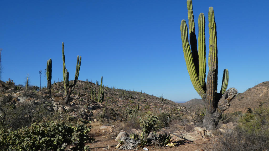 Did I mention the cacti were HUGE?