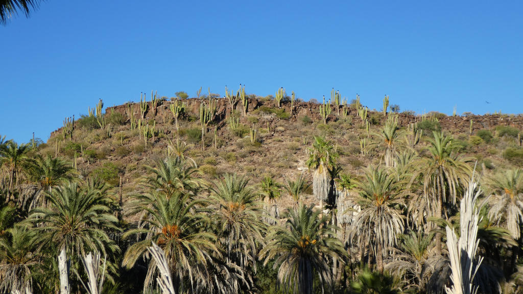 So typical Baja with cacti and palm trees!